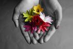Flowers by Alice Gong '16, Binita Gupta '16, and Cindy Ho '16