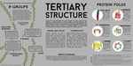 Poster 4: Tertiary Structure