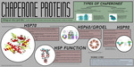 Poster 6: Chaperone Proteins by Grace Carlberg '16, Andy Xu '16, and Andrew Adams '16