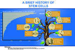 01: A Brief History of Stem Cells by Jeffrey Zhao '13 and Illinois Mathematics and Science Academy