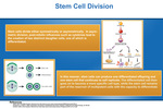05: Stem Cell Division by Kyle Mou '13 and Ty Bottorff '13