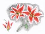 Lilium orientalis by Vaishnavi Vanamala '20